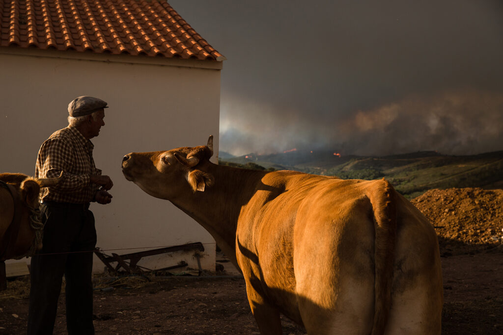 Wild Fires: Portugal